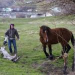 Новочеркасск. Руслан и Лошадь