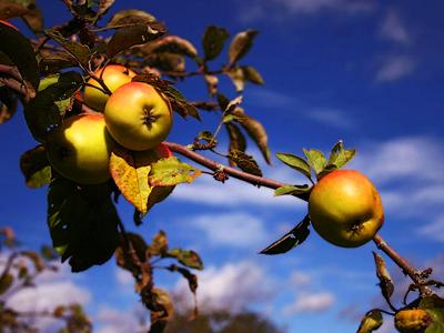 Ярославцы отметили Яблочный спас.