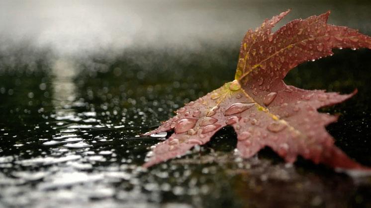 Грустно и мокро…