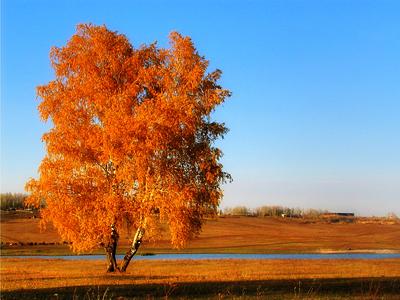 Осень, рыжая подружка