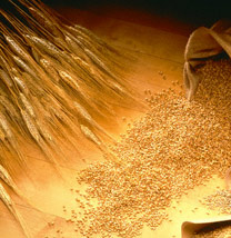 Перловая крупа. Фото с сайта smkprodukt.ru