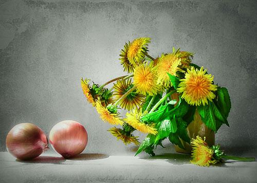 Одуванчиковый натюрморт. Фото Natalia Jeshoa