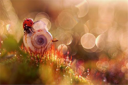 In My Magic Garden. Фото Magdalena Wasiczek