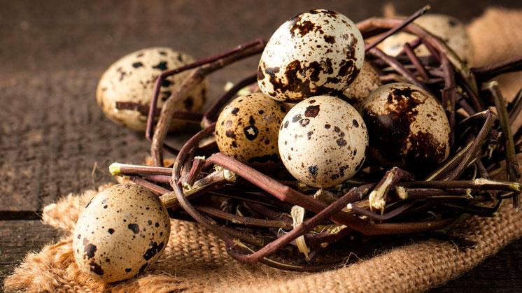 Золотое яйцо перепёлки