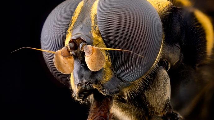 Из мухи слона…