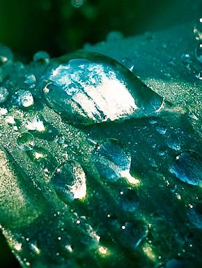 Капля дождя
