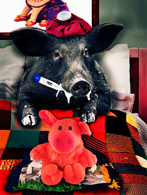 Свиной грипп (Swine Flu — A/H1N1)
