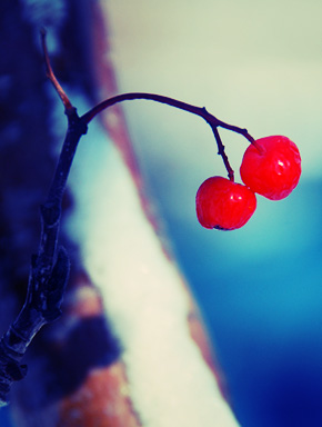 Красное на фоне первого снега