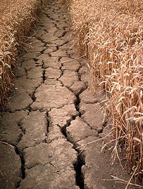 Климатическая война - засуха