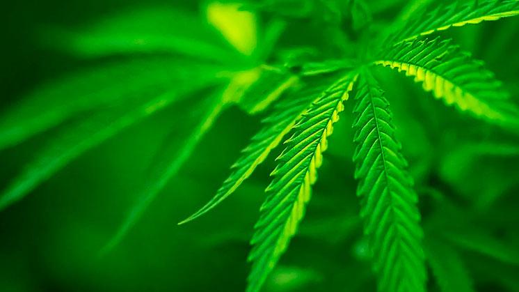 Проигранная война с наркотиками