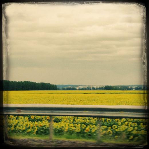 По дороге в Нефтекамск. © фото Роман Данилин' 2012 / www.RomanDanilin.ru