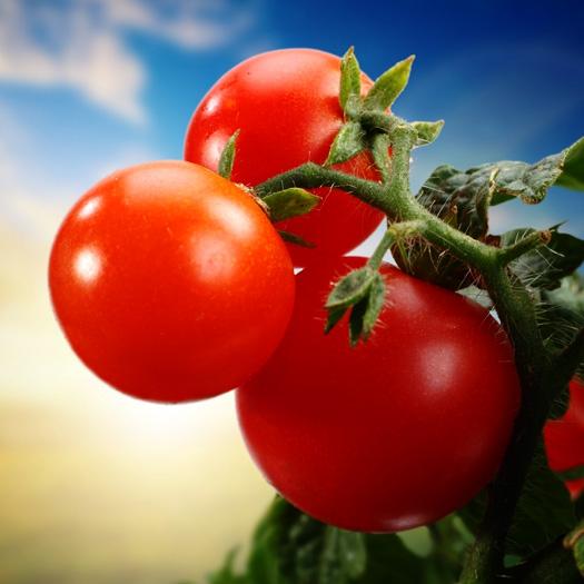 впер бабе по самые помидоры