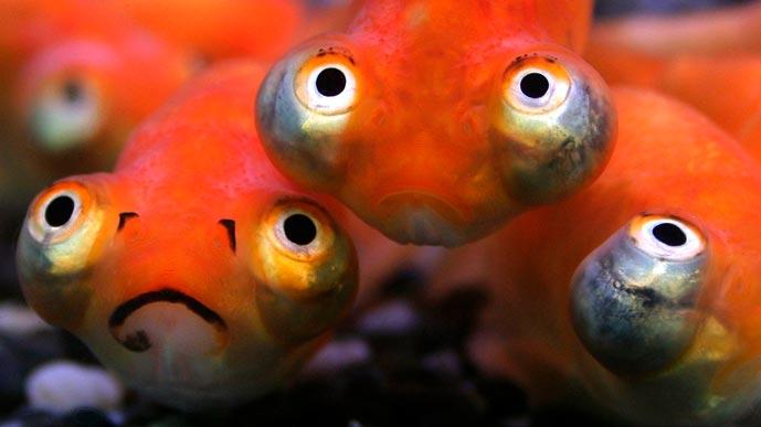 Рыба плавает в пруду